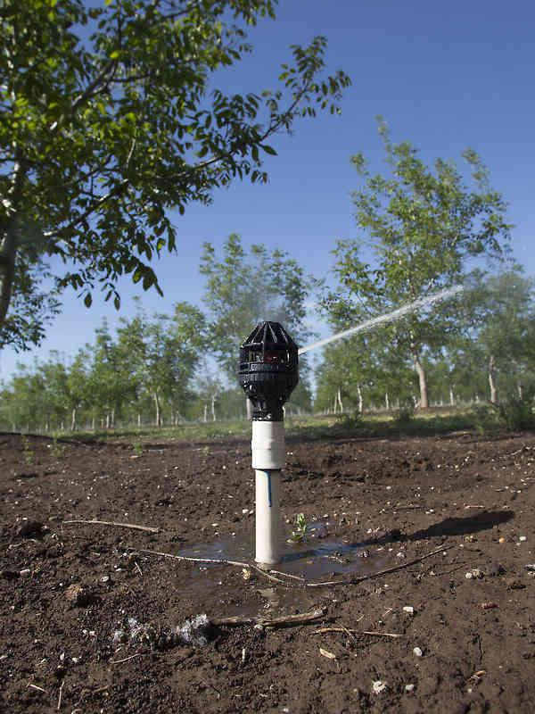 Nelson's R2000 Rotator® sprinkler irrigating tree nuts in California